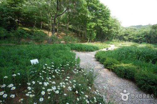 首尔大冠岳树木园