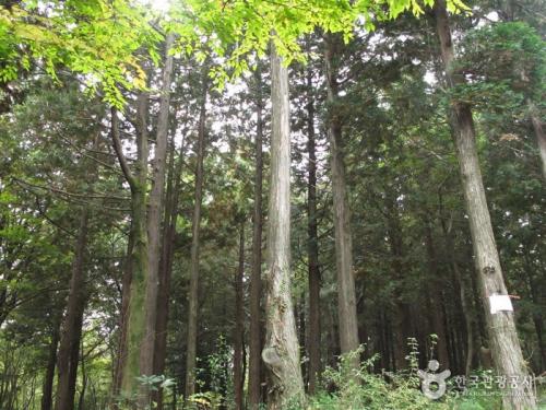 西归浦自然休养林