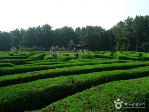 金宁迷宫公园