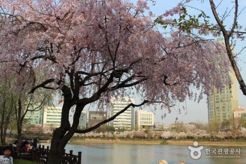 石村湖水樱花节